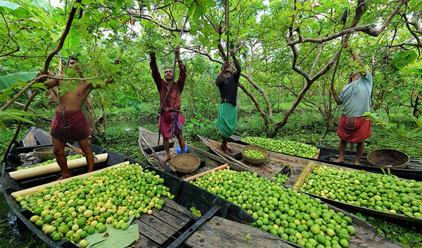 barisal guava market floating